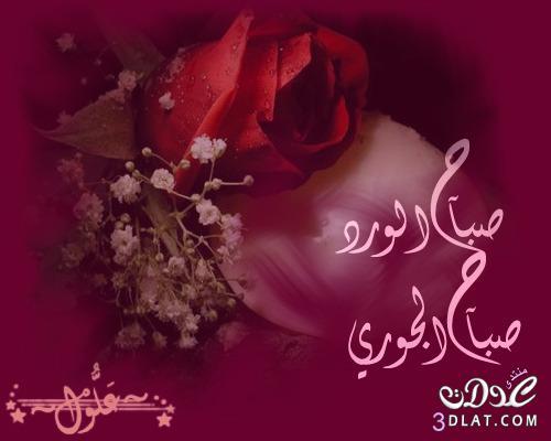 بالصور صباح الورد حبيبتي , اجمل صباح للاحباب 5319 4