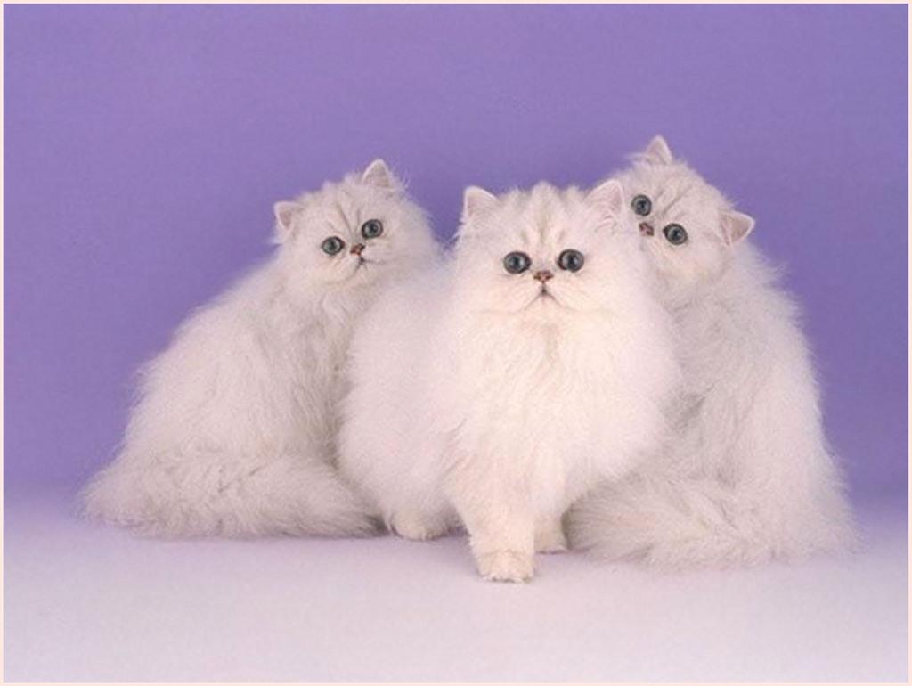 بالصور اجمل صور قطط , صور قطط كيوت 3764 10