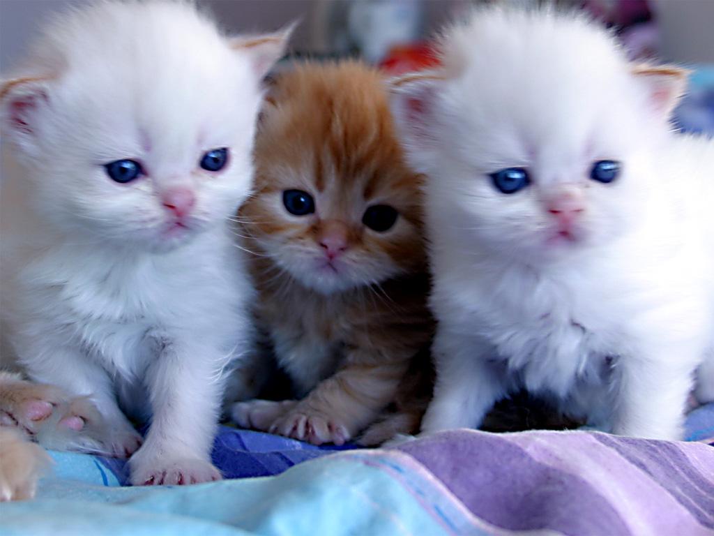 بالصور اجمل صور قطط , صور قطط كيوت 3764 11