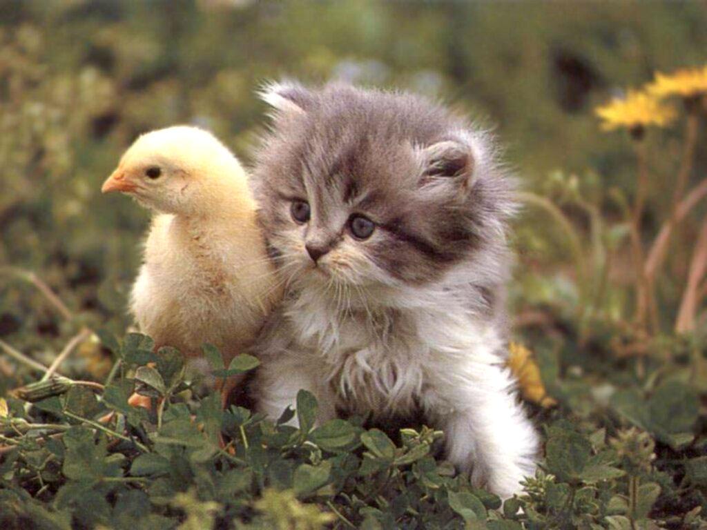 بالصور اجمل صور قطط , صور قطط كيوت 3764 3