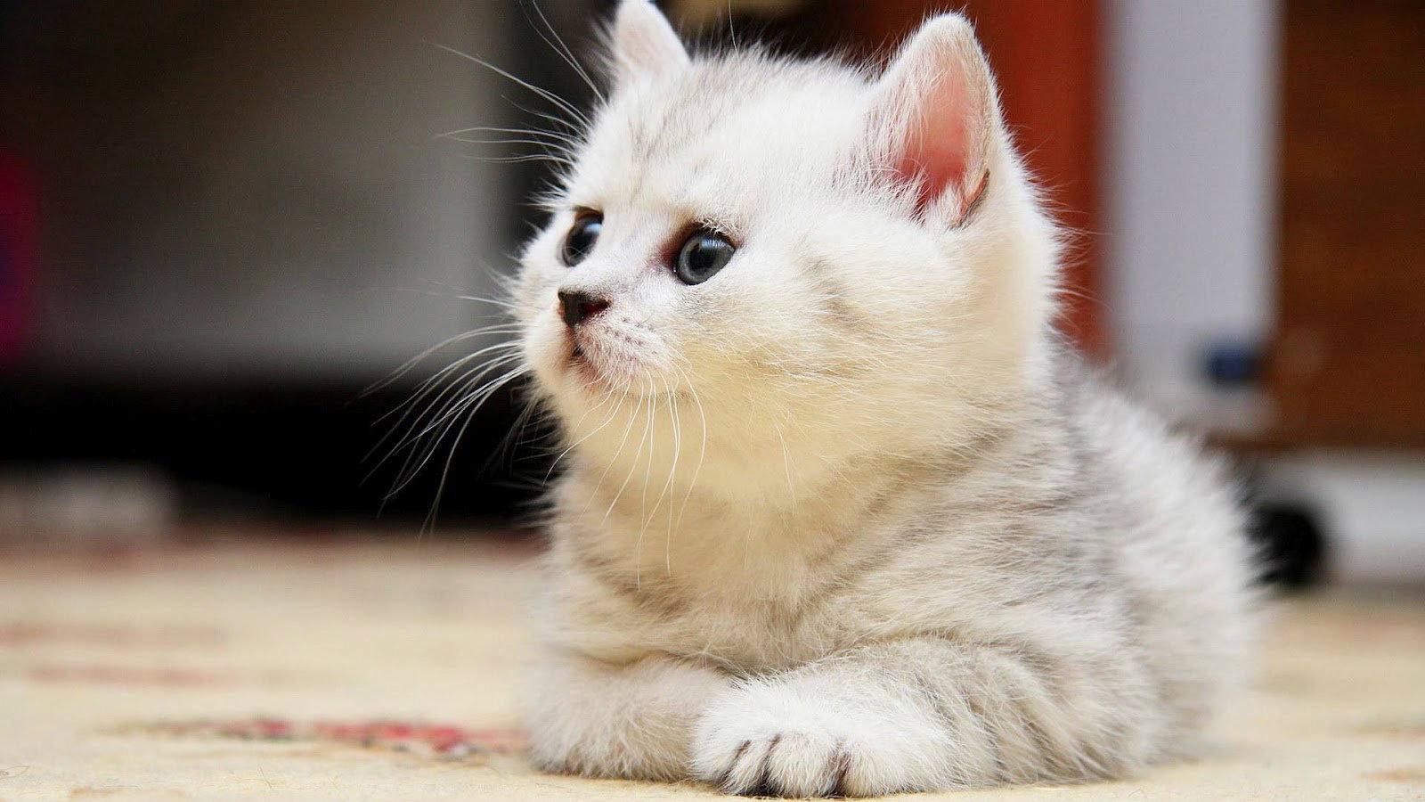 بالصور اجمل صور قطط , صور قطط كيوت 3764 4