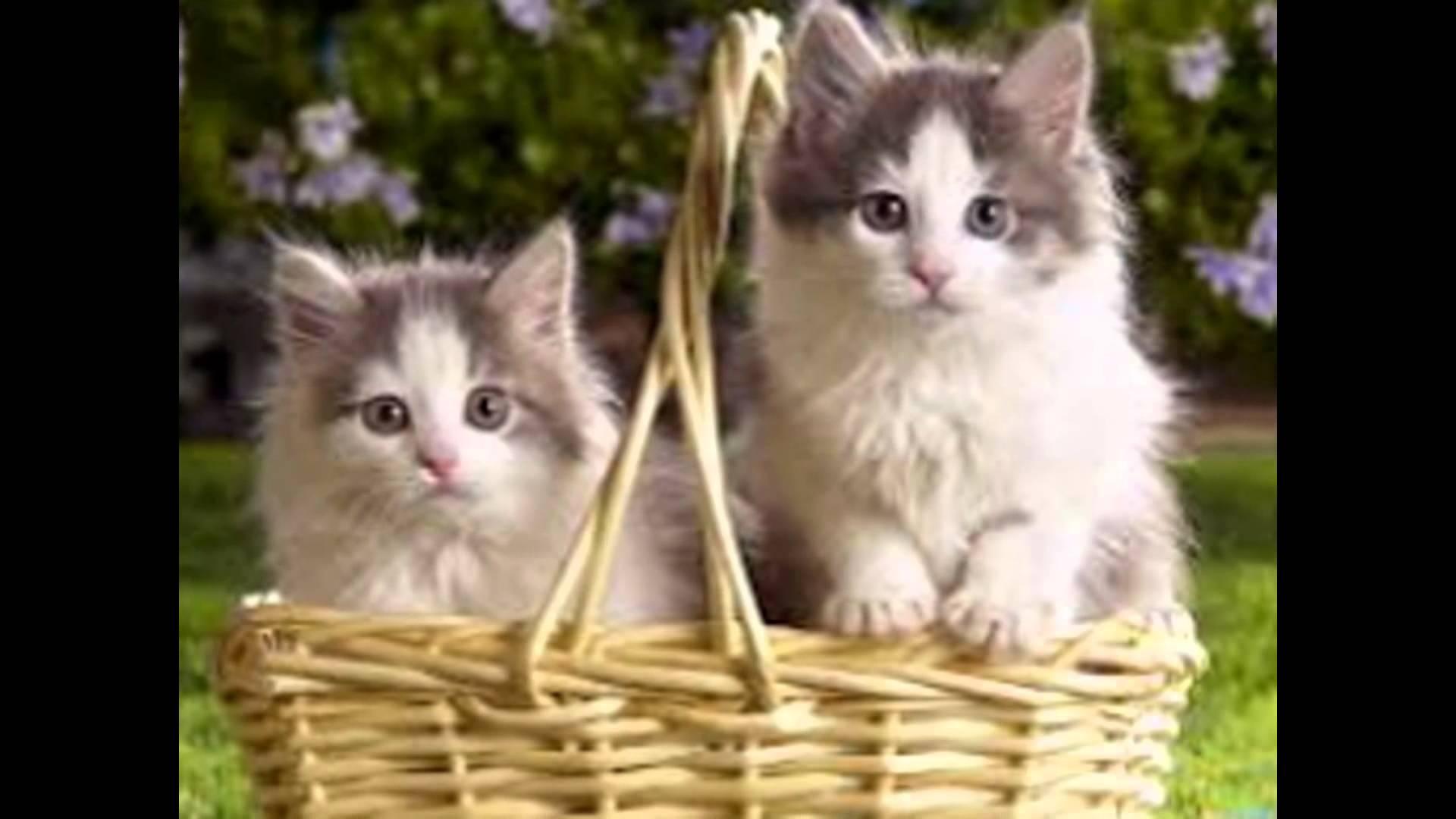 بالصور اجمل صور قطط , صور قطط كيوت 3764 5