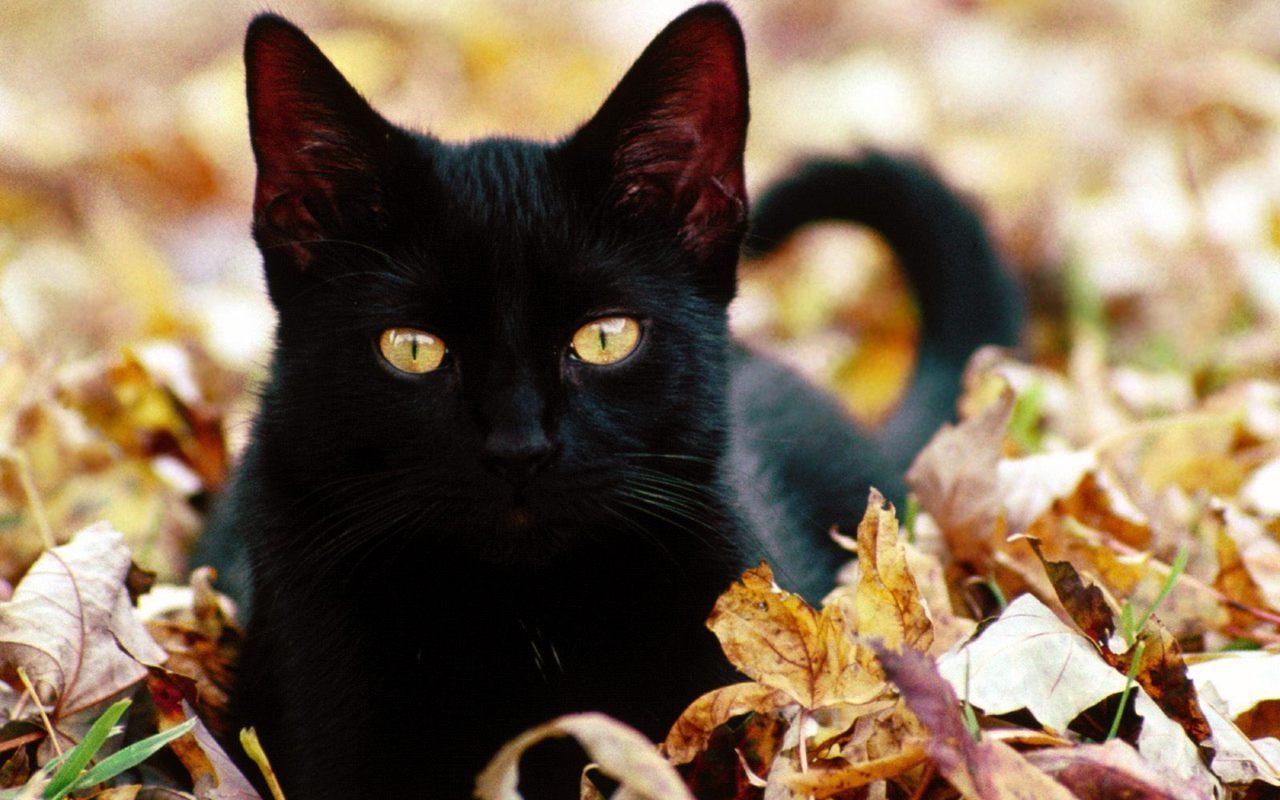 بالصور اجمل صور قطط , صور قطط كيوت 3764 6