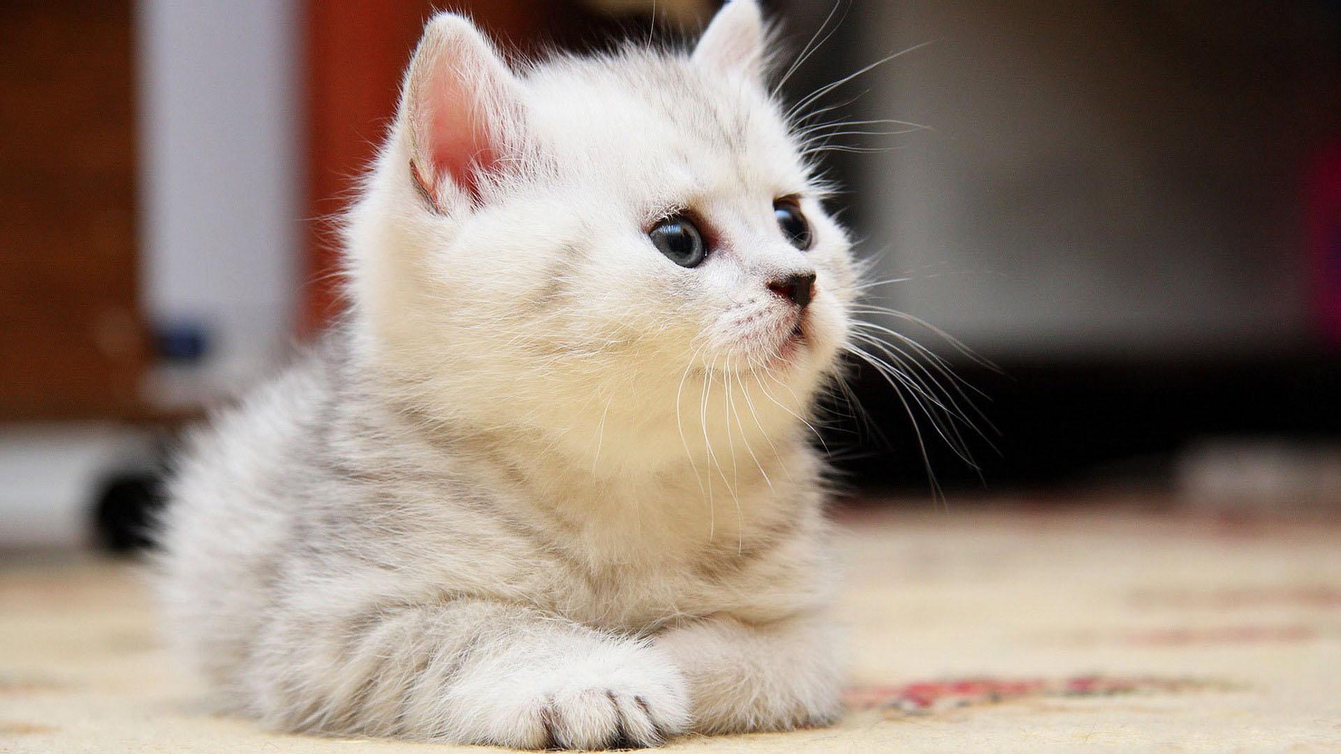 بالصور اجمل صور قطط , صور قطط كيوت 3764 7