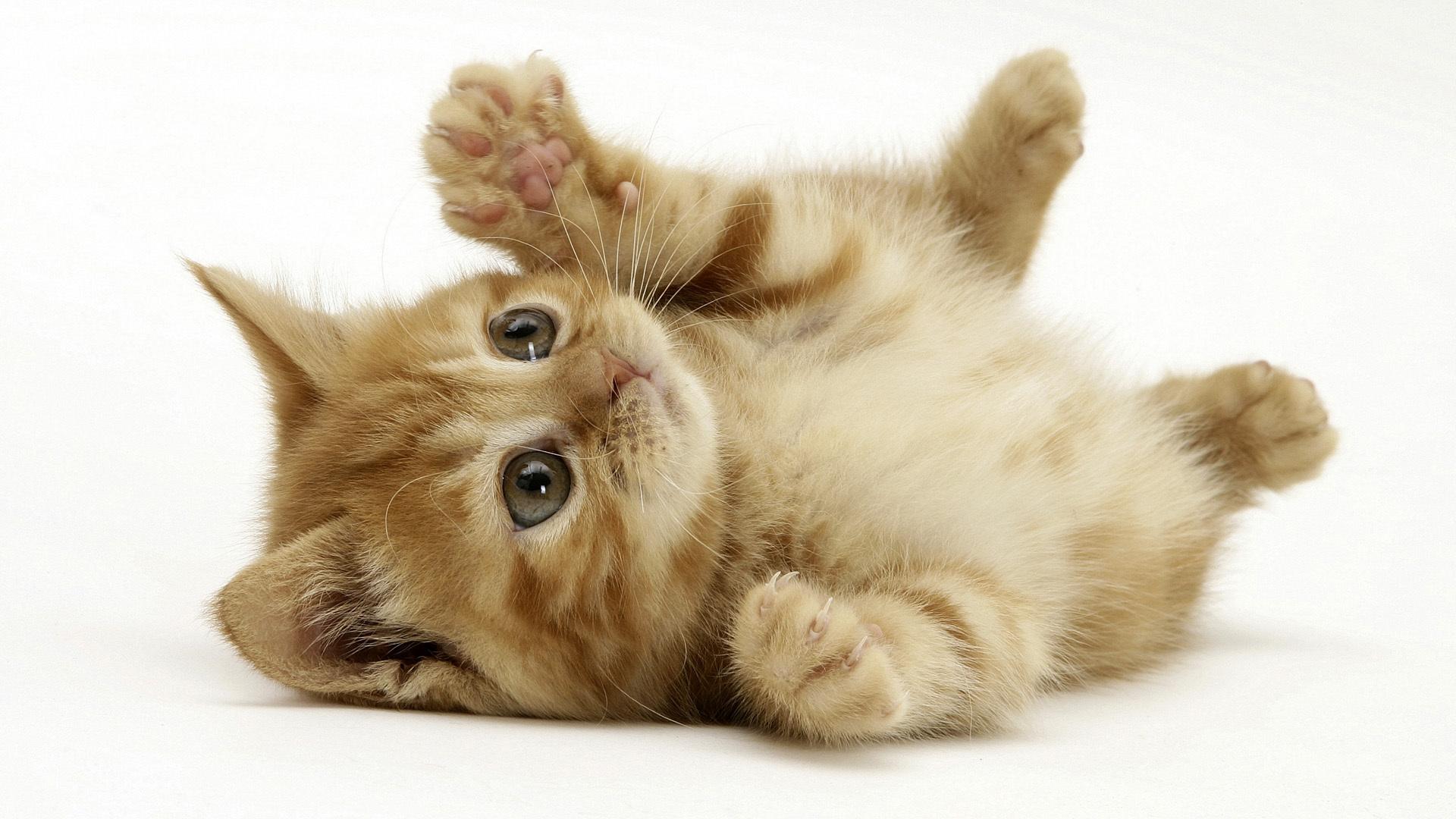 بالصور اجمل صور قطط , صور قطط كيوت 3764 8