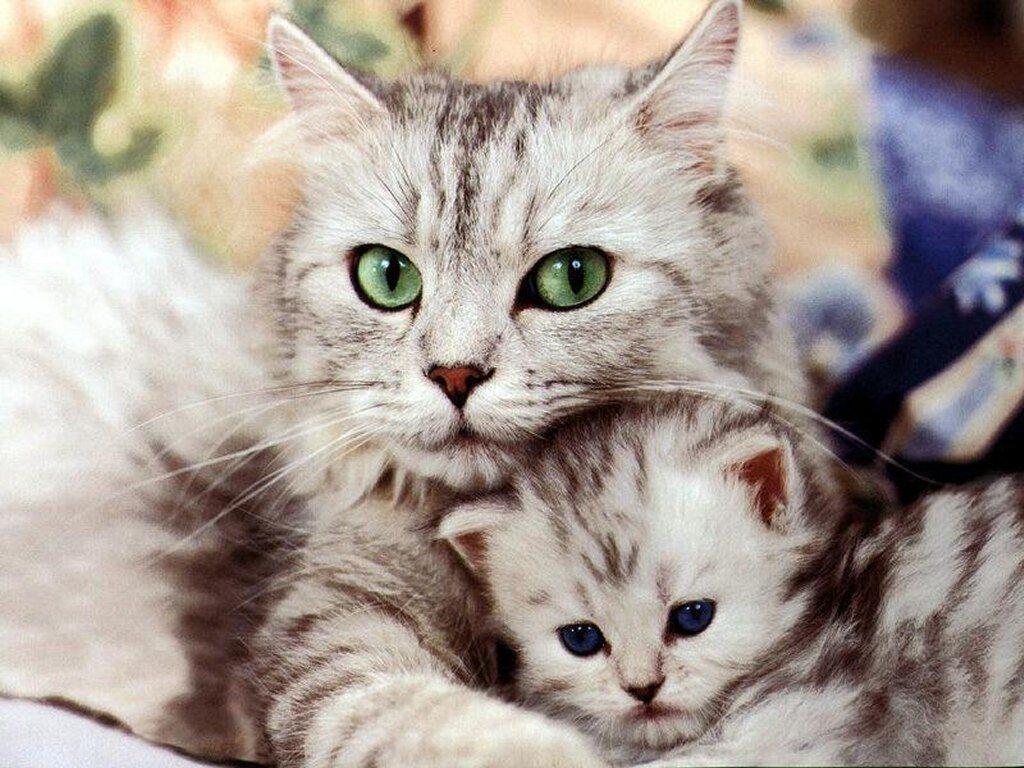 بالصور اجمل صور قطط , صور قطط كيوت 3764 9