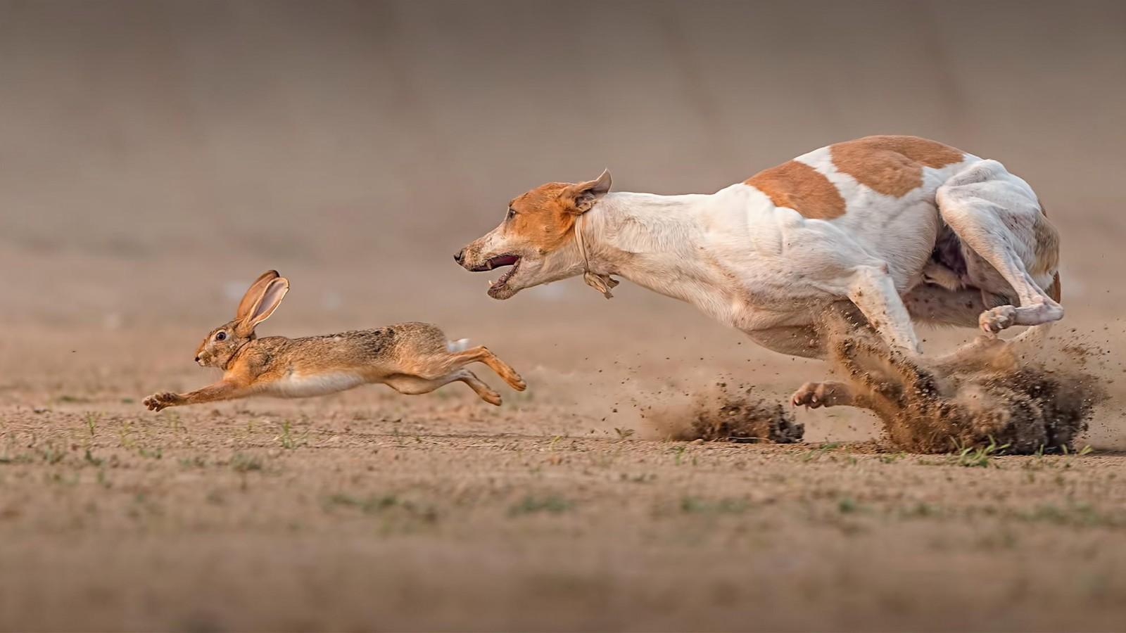 صور صور حيوانات مضحكة , صور جديدة للحيوانات