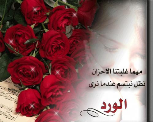 بالصور عبارات عن الورد , اجمل التعبيرات عن الورد 4750 1