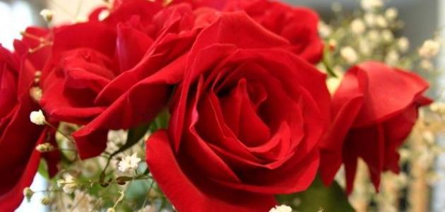 بالصور عبارات عن الورد , اجمل التعبيرات عن الورد 4750 7