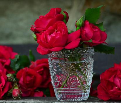 بالصور عبارات عن الورد , اجمل التعبيرات عن الورد 4750