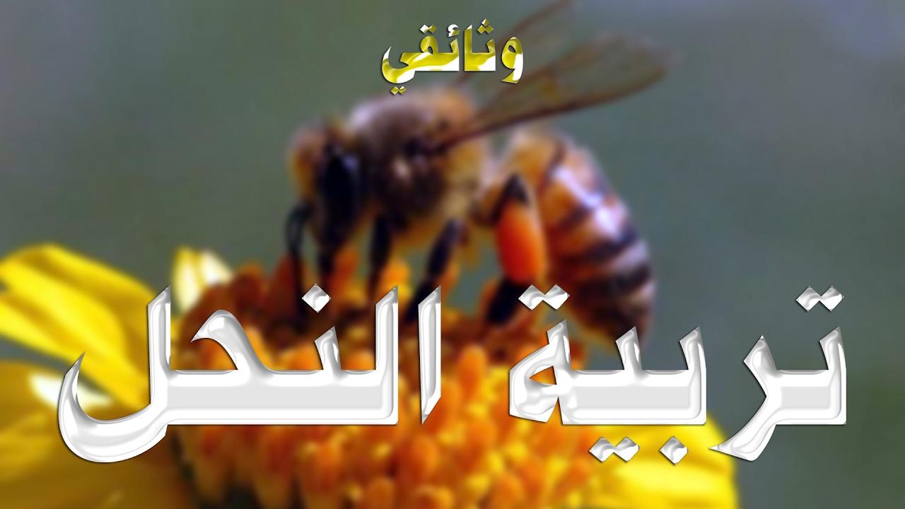 بالصور تربية النحل , كيف اعتني بتربيه النحل 5390 1