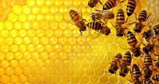 تربية النحل , كيف اعتني بتربيه النحل