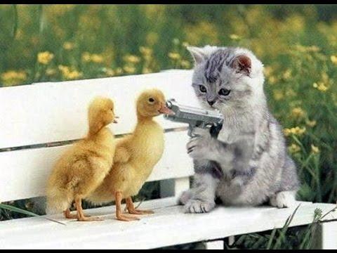 صورة قطط مضحكة , اجمل صور للقطط