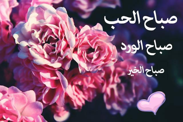 بالصور خواطر عن الورد , اجمل كلام عن الورد 5710 9