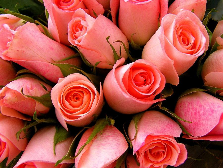 بالصور صور ورود حلوه , احلي الورود بانواعها المختلفة 5860 12