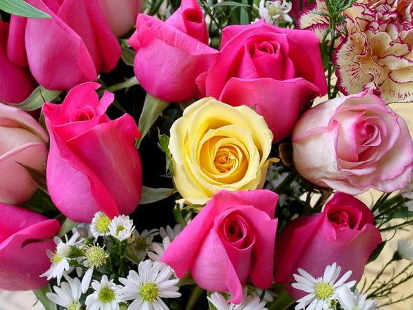 بالصور صور ورود حلوه , احلي الورود بانواعها المختلفة 5860 3