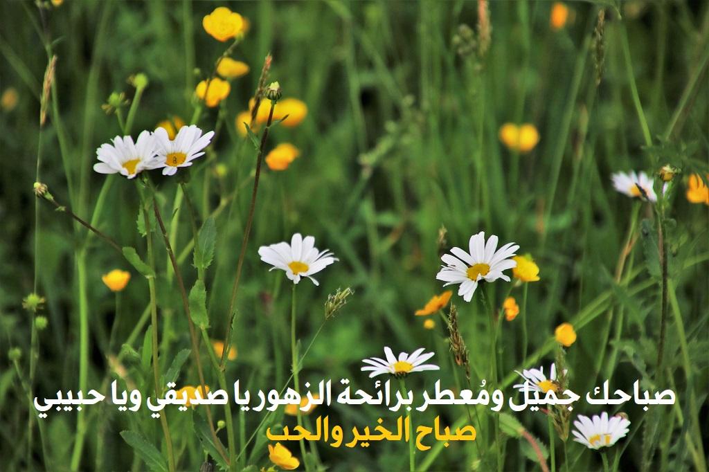 بالصور حبيبي صباح الخير , عبارات وتصميمات صباح الخير يا حبيبي 5899 7