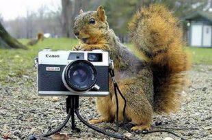صورة اغرب الصور في العالم , اجمل واغرب الصور في العالم