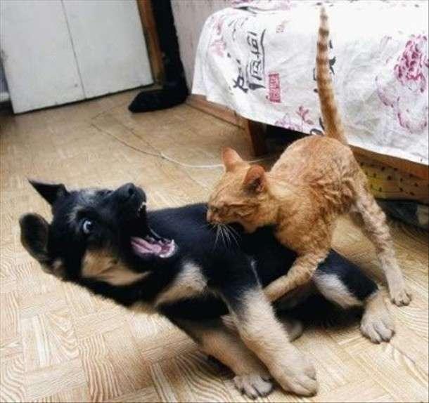 صورة قطط وكلاب , اجمل الصور للقطط والكلاب