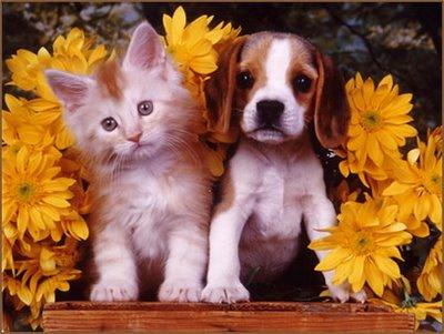 بالصور قطط وكلاب , اجمل الصور للقطط والكلاب 6059 10