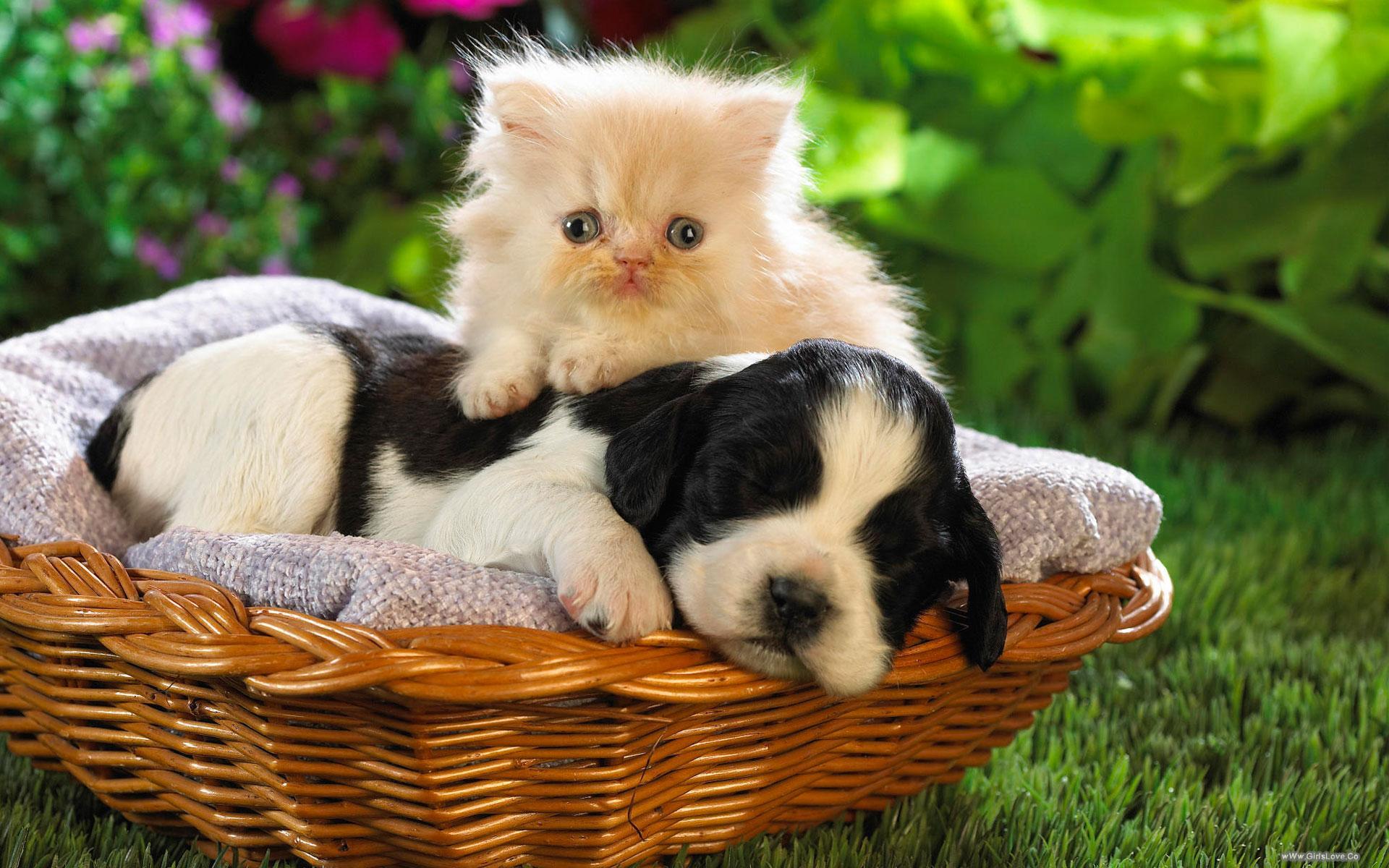 بالصور قطط وكلاب , اجمل الصور للقطط والكلاب 6059 11