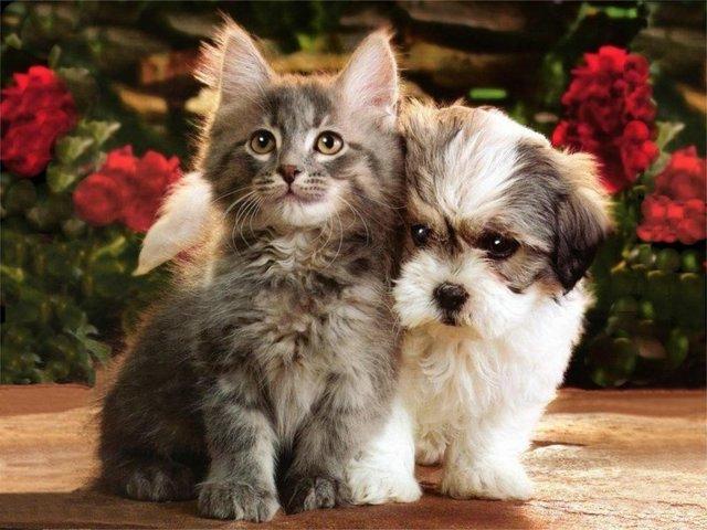 بالصور قطط وكلاب , اجمل الصور للقطط والكلاب 6059 12