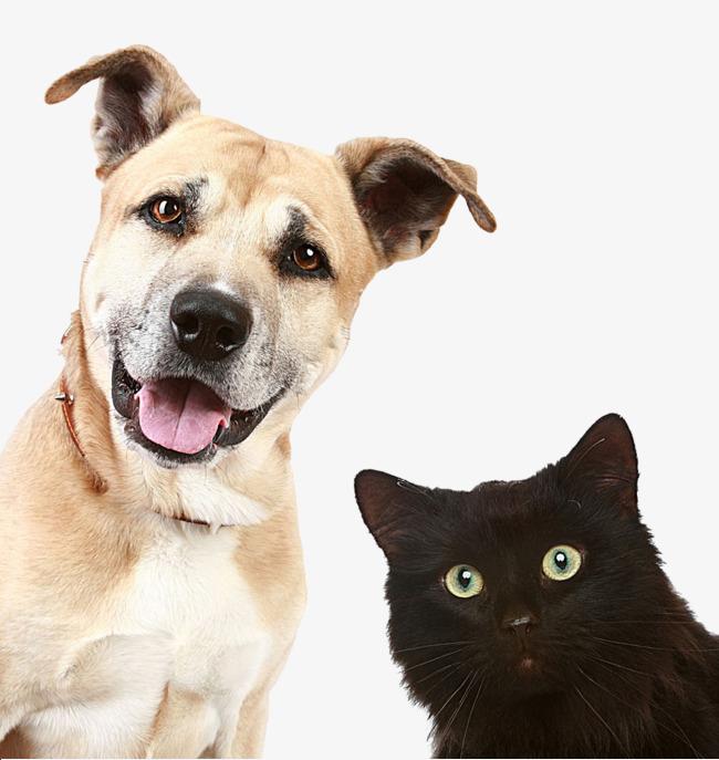 بالصور قطط وكلاب , اجمل الصور للقطط والكلاب 6059 2
