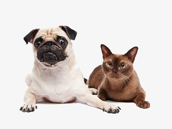 بالصور قطط وكلاب , اجمل الصور للقطط والكلاب 6059 3