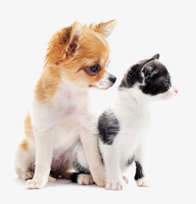 بالصور قطط وكلاب , اجمل الصور للقطط والكلاب 6059 4