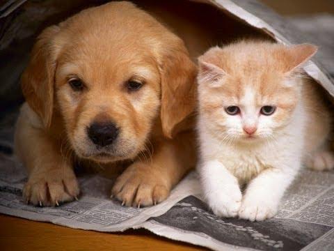 بالصور قطط وكلاب , اجمل الصور للقطط والكلاب 6059 5