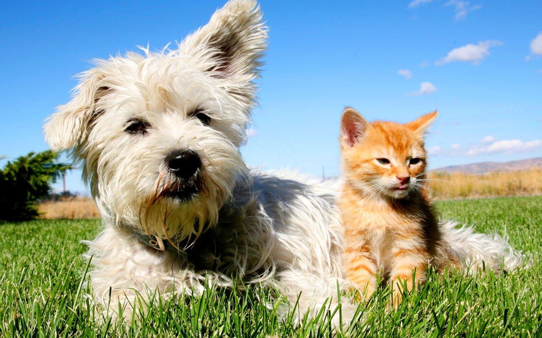 بالصور قطط وكلاب , اجمل الصور للقطط والكلاب 6059 7