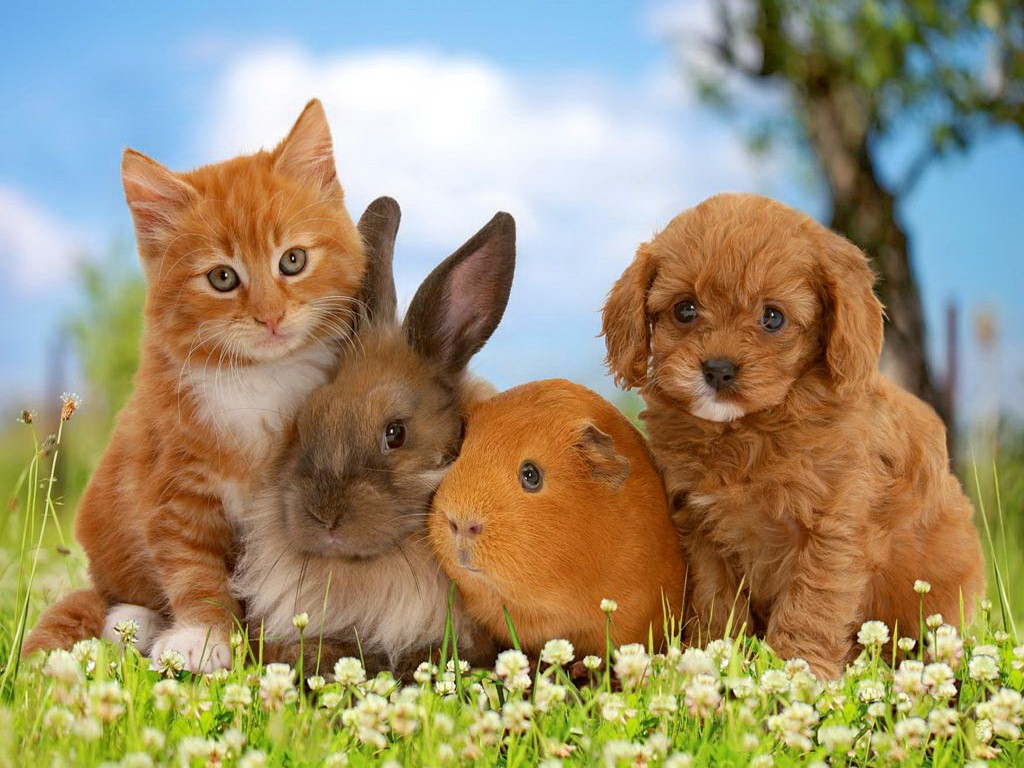 بالصور قطط وكلاب , اجمل الصور للقطط والكلاب 6059 8