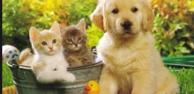 بالصور قطط وكلاب , اجمل الصور للقطط والكلاب 6059 9