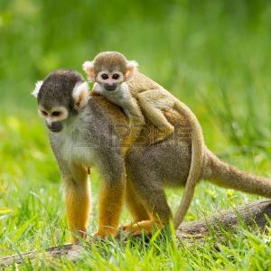 صورة صور حيوانات , اجمل صور الحيوانات