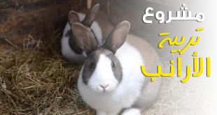 بالصور تربية الارانب في المنزل , افضل الطرق لتربية ارانب في المنزل 6258 1 310x165