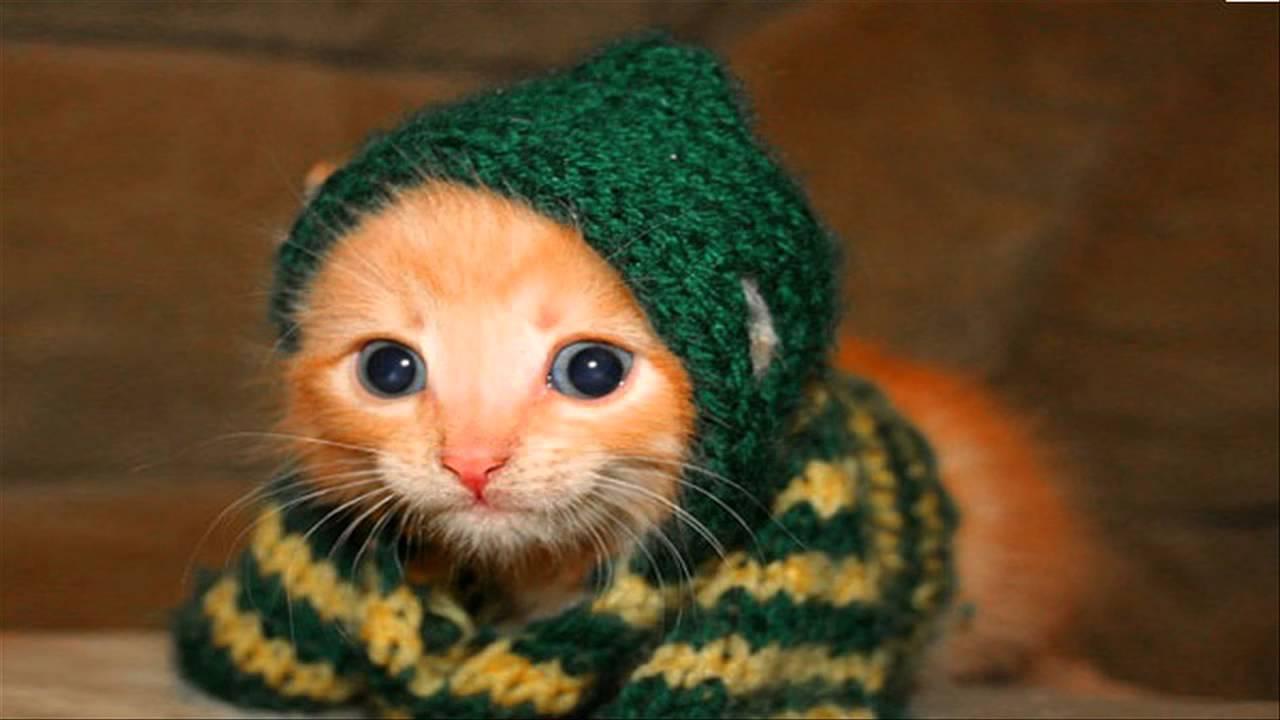 صورة صور قطط مضحكة , صور جميلة ومضحكة للقطط