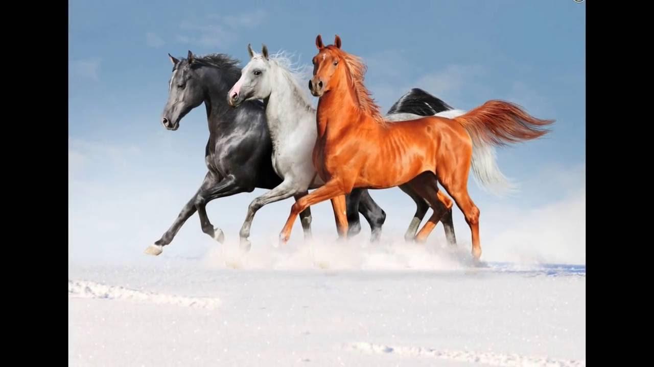 صورة صور خيل , صور رائعة وجميلة للخيول