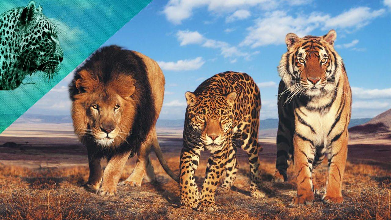 صورة اسرع حيوان في العالم , مجموعة صور لاسرع الحيوانات حول العالم