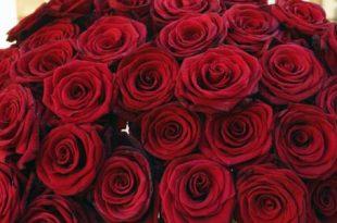 صورة حكم عن الورد , صور فيها حكم عن جمال الورد