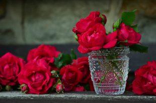 صورة صور عن الورد , مجموعة من صور الورود