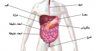 صور جسم الانسان بالصور , اعضاء الجسم للانسان