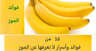 صورة ماهي فوائد الموز , اهم الفوائد العديدة للموز