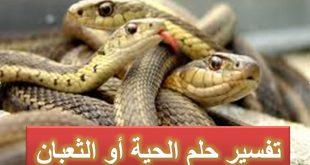 بالصور الثعابين في المنام , تفسير معنى الثعابين فى المنام 820 2 310x165