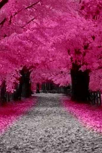 صورة صور جميله جدا جدا , اجمل و اروع الصور