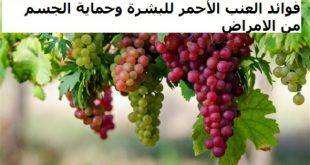 صور فوائد العنب الاحمر , استخدامات العنب والفوائد والاضرار الصحية له