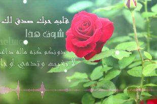 صورة شعر عن الورد , عبارات رومانسية عن الورد