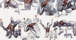 بالصور تمارين كمال اجسام , اقوي تمارين متنوعة لعمالقة كمال اجسام 2680 5 310x165