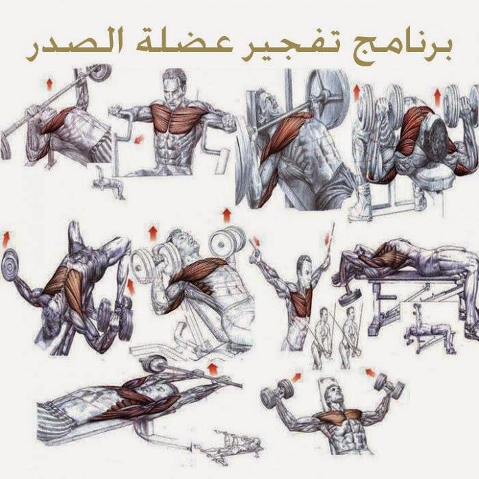 صورة تمارين كمال اجسام , اقوي تمارين متنوعة لعمالقة كمال اجسام