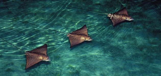 صورة عجائب البحر , اغرب اسرار و مخلوقات بحرية
