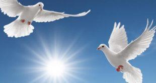 صورة صور عن السلام , صور جميله عن الامن و الامان